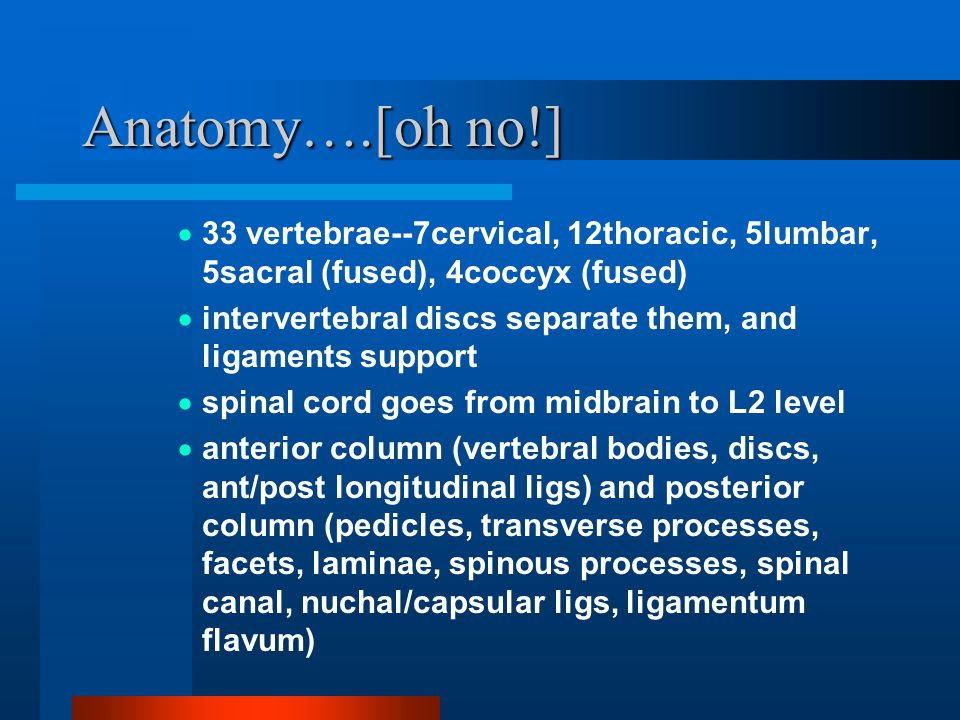 Anatomy….[oh no!] 33 vertebrae--7cervical, 12thoracic, 5lumbar, 5sacral (fused), 4coccyx (fused)